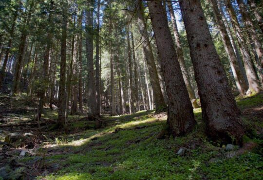 foreste vaia